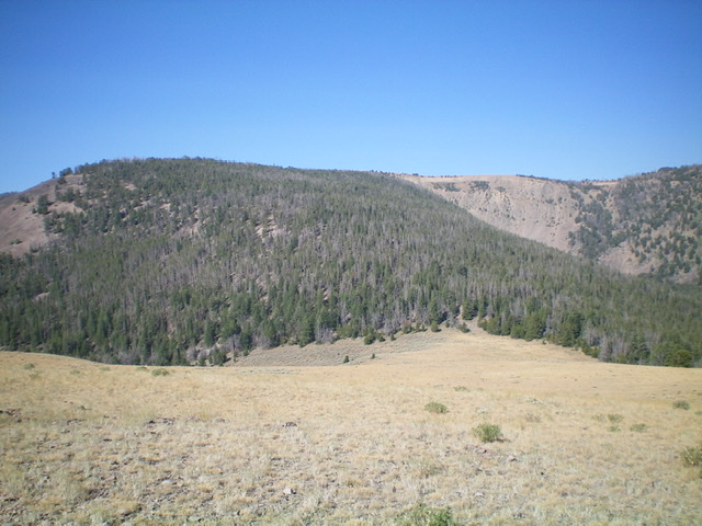 Bear Benchmark as viewed from the east, just above the final saddle (right of center). The summit is left of center and is hidden behind the trees. From the grassy saddle, bushwhack diagonally left to reach the summit ridge and then head west for over 1/2 mile to FINALLY reach the top. Livingston Douglas Photo