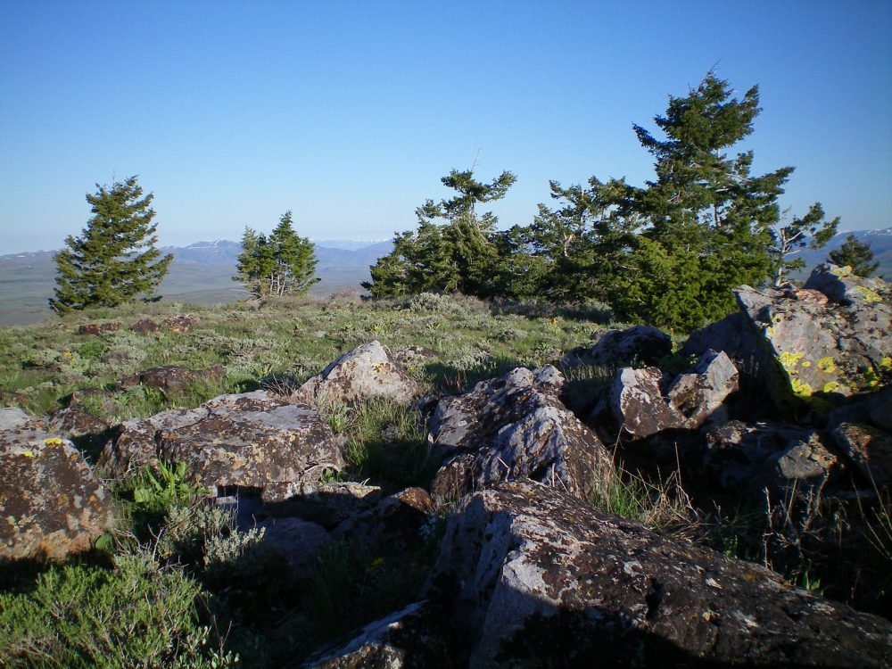 The summit boulders and pine trees atop Pine Mountain. Livingston Douglas Photo