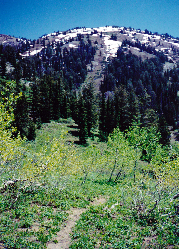 The view looking east from Spaulding Basin to Richards Peak. The Blouout Canyon-Spring Run Trail is the closest a trail gets to the peak. Bushwacking in the Snake River Ragne is best done in late spring and the fall. Rick Baugher Photo and Commentary 6-20-1999