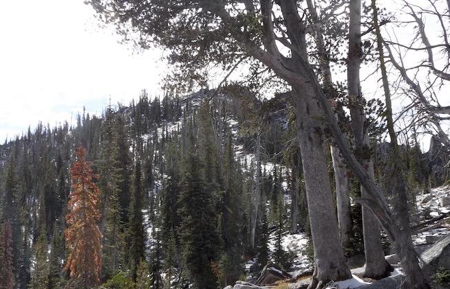Bearpaw Peak. John Platt Photo