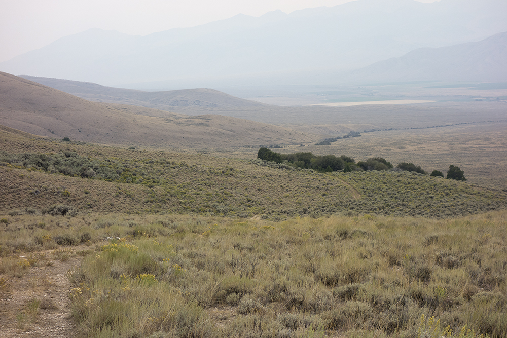 The line of cedars in the distance leading to Mud Springs. Larry Prescott photo.
