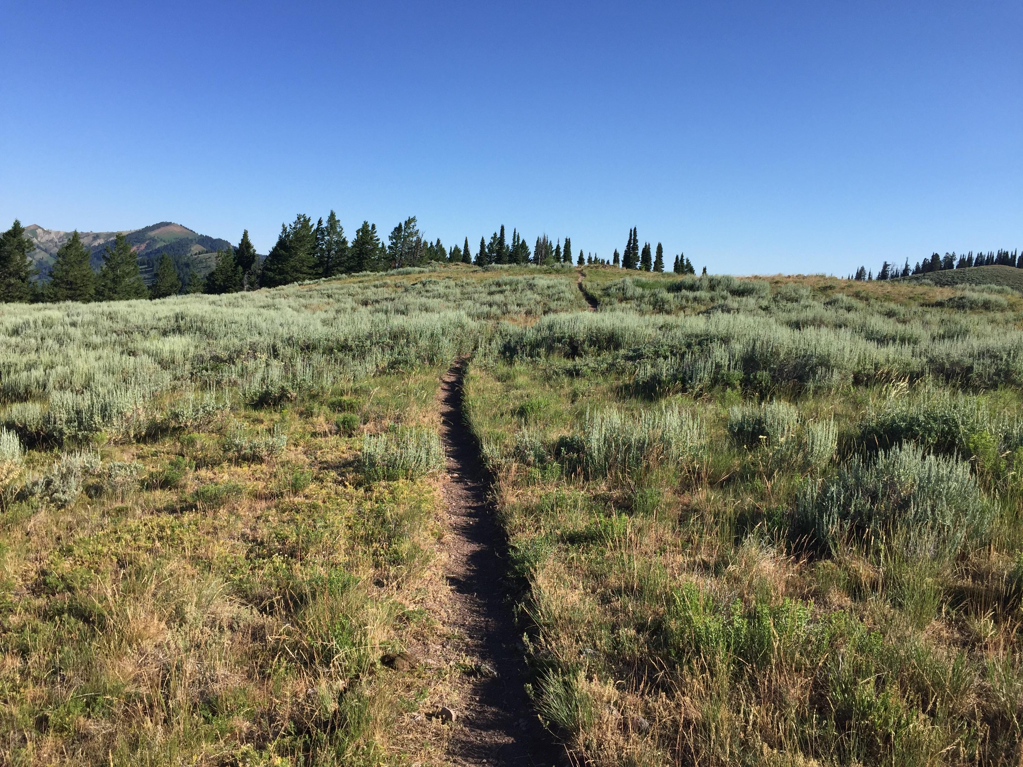 Approaching Peak 7800 from Pine Creek Summit.