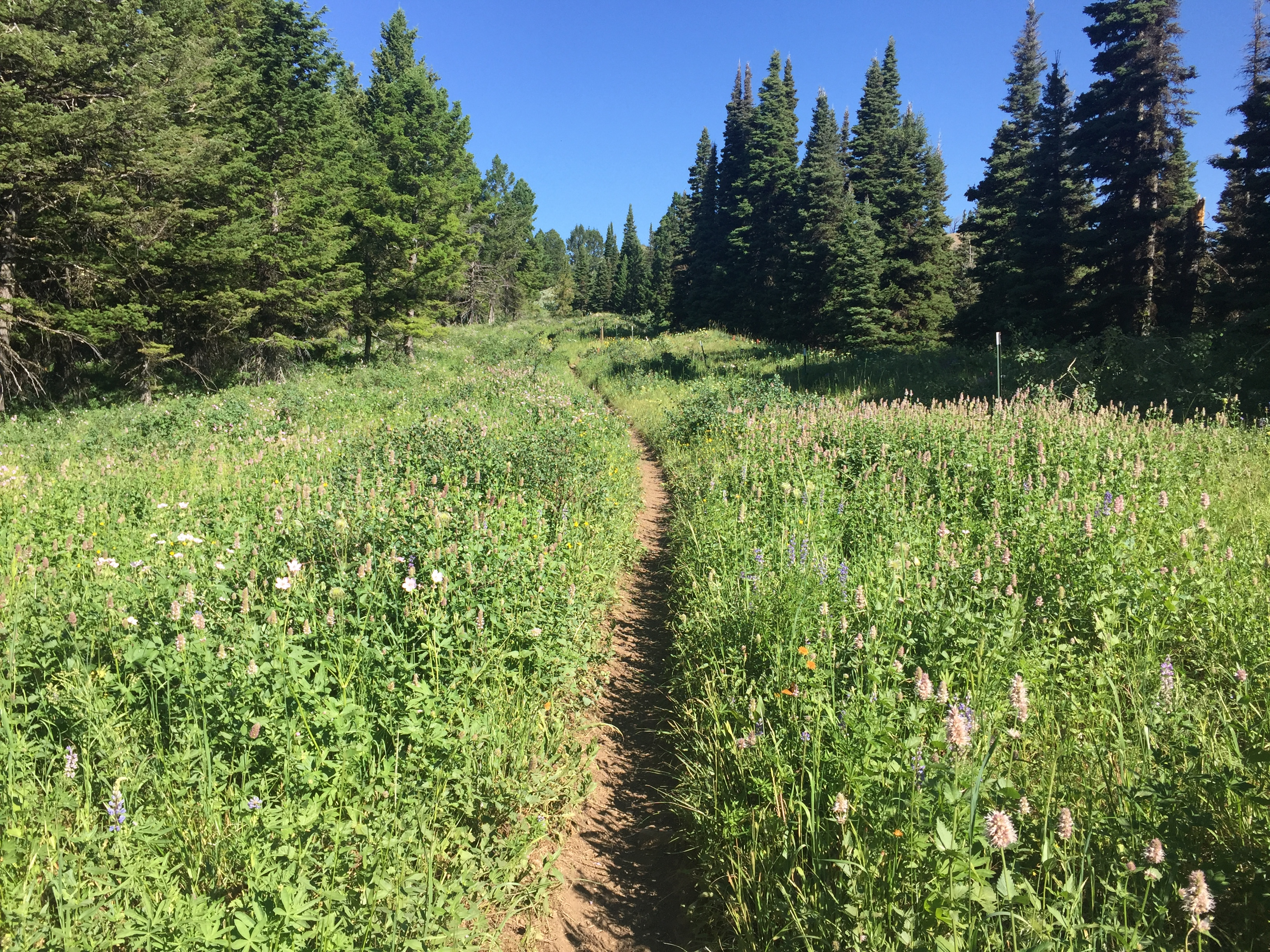 The Big Hole Mountain ridge trails are cross deluxe country.