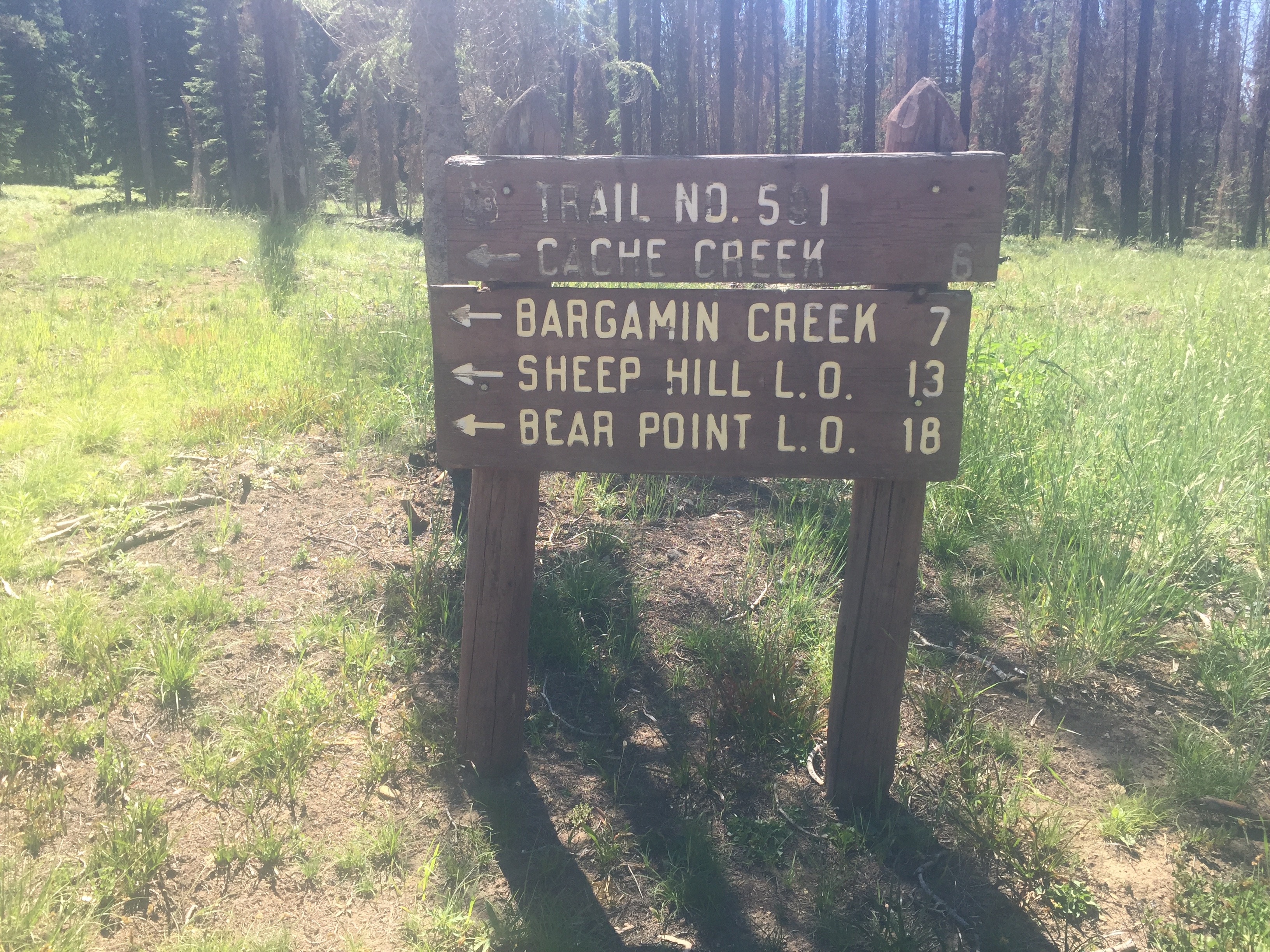 The 14-Mile Tree Trailhead is the beginning of FS-501.