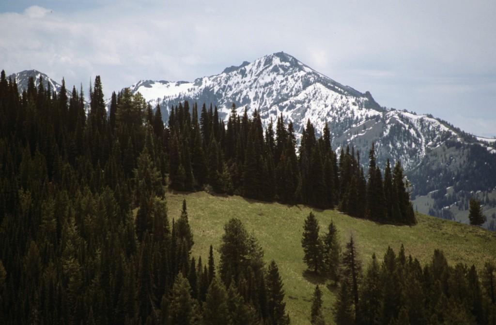 Iron Mountain from Jumbo Mountain.