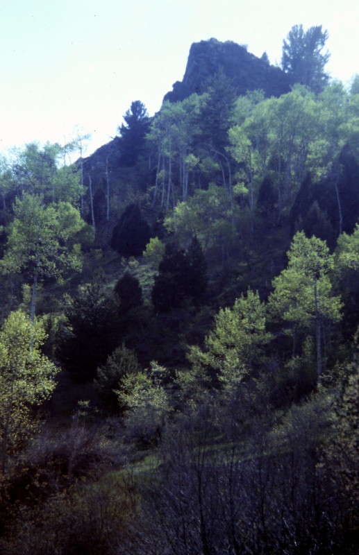 Both ranges have thick, mixed specie vegetation at lower elevations which can make crosscountry approaches problamatic.
