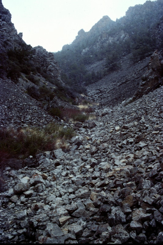 The McGowan drainage is typical of most Lost River Range drainages where water will often dissappear under ground. You will find good game trails in parts of the drainage and thick brush in other parts but the walking is generally good.