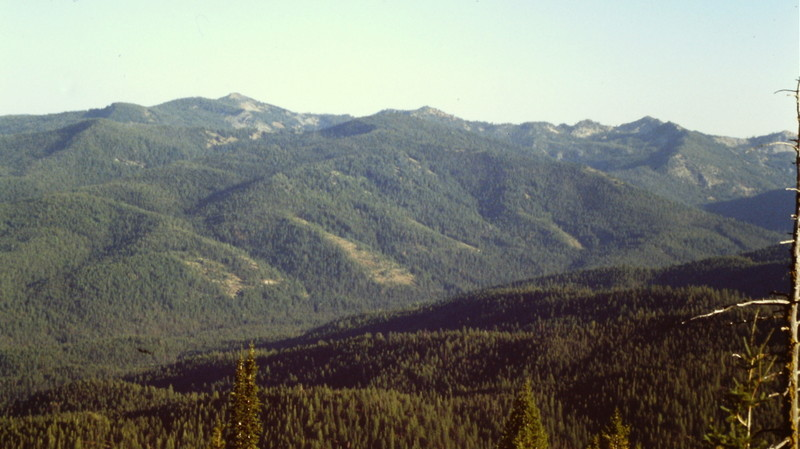 How many of these trees have survived the effects of recent forest fires? Another view from Stolle Peak.
