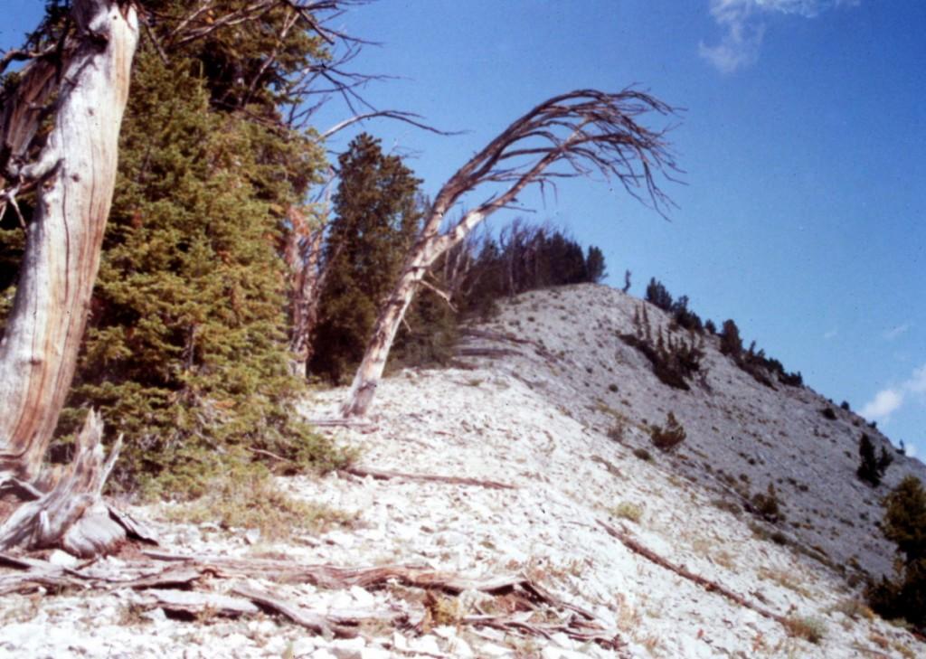 Mount Jordan's south ridge provides good access to the summit.