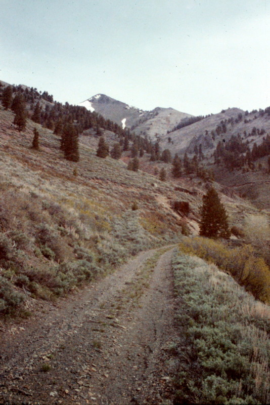 The old mining road leading into Scorpion Mountain.