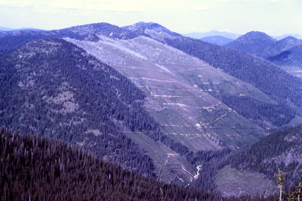 This picture was taken in 1984. The giant clearcut shown is just one of many. It demonstrates the pressures placed on these mountains by resource extractors.