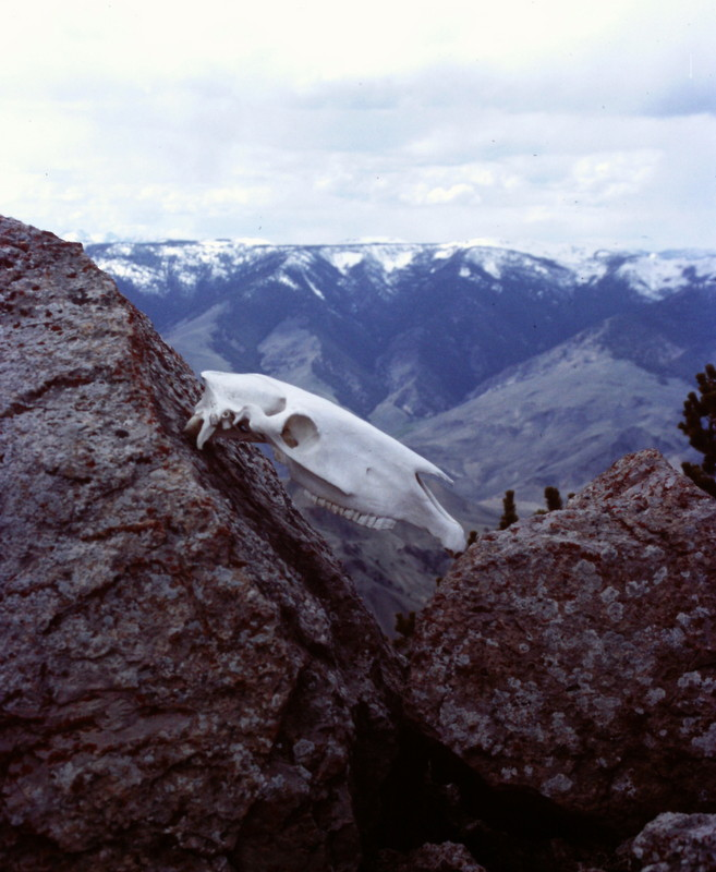 Some one propped this skull up on the peak's summit block.