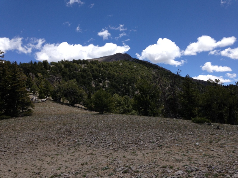 This view up the ridge is taken at roughly 9,200 feet.