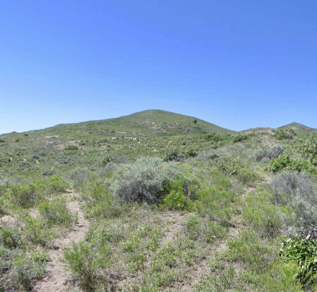 Game path on Peak 5961. Steve Mandella photo.