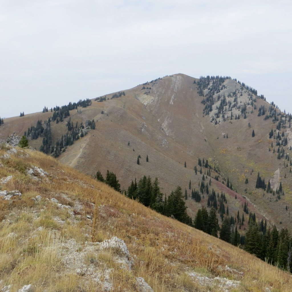 Piney Peak from Peak 8619. Steve Mandella photo.
