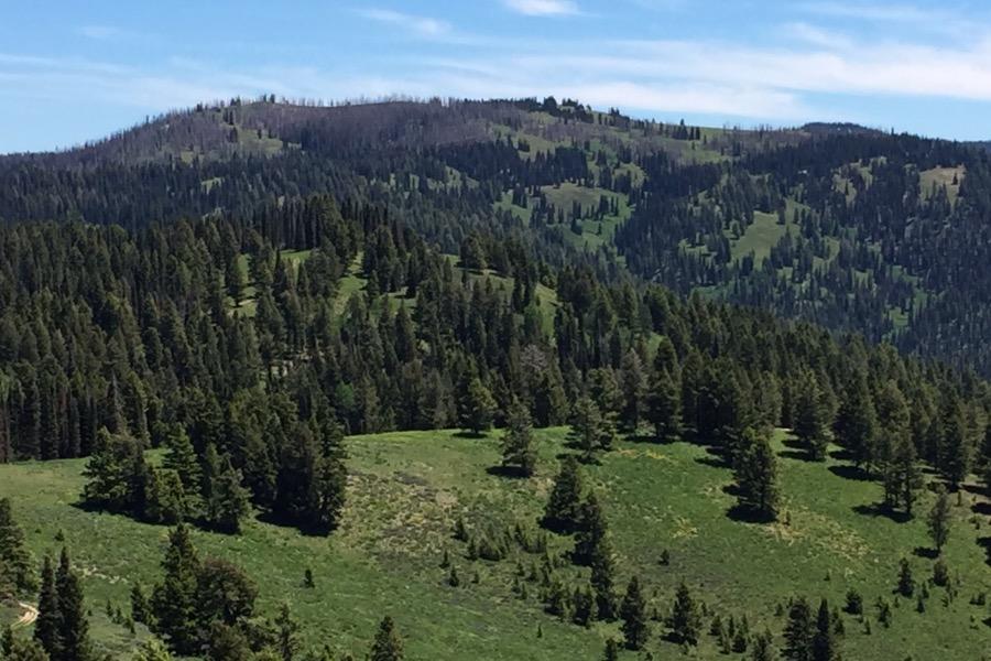 Peak 7905 from Jackson Peak.