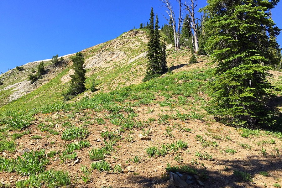 The northeast ridge is steep but without obstacles.