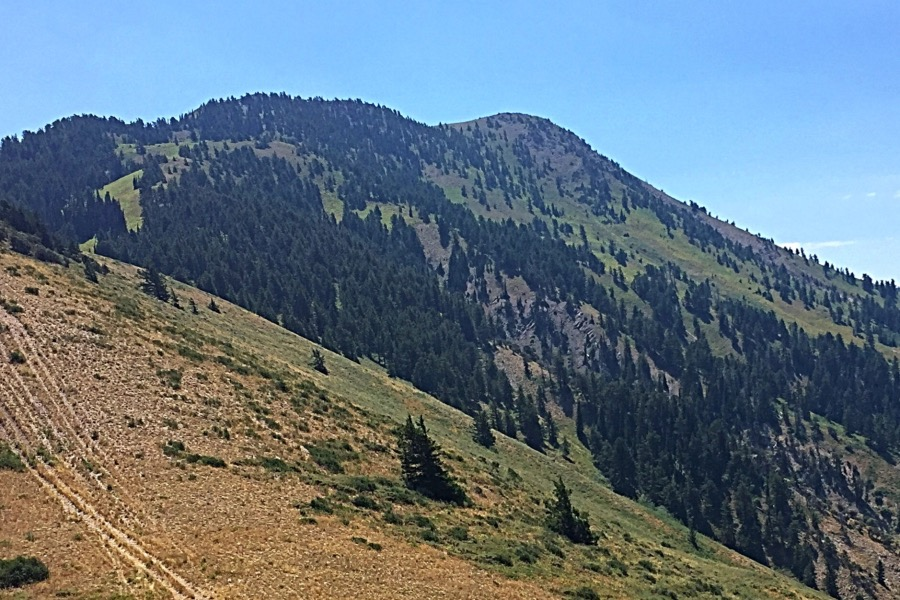 This view of Oxford Peak was taken on the descent. The west ridge is on the right and the north ridge on the left.