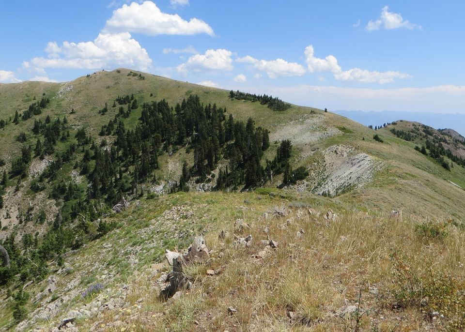 Looking toward the summit from the intermediate high point. It is easy walking the rest of the way.