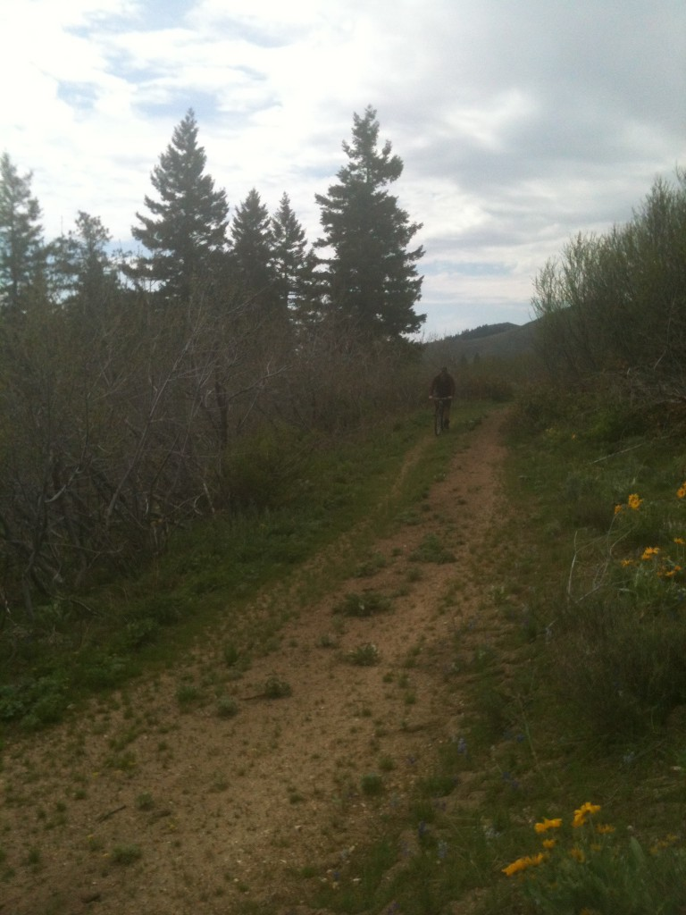 The ridge top road is good enough for mountain biking. I have never been on this road when the gate was open.