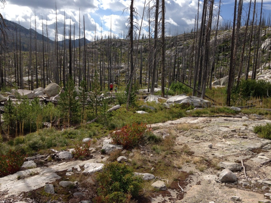 Bushwacking through the burned sections of the Lick Creek Range is a bit easier than before the fires because you can see where you are going. Nevertheless, it is not easy walking as the granite often forms undulating terrain and you constantly crossing downed trees.