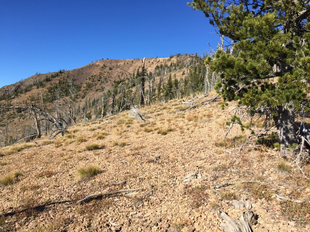 A view along the ridge. Section of the north ridge were open and others were forested. Footing varied from easy to ball bearing, lose gravel.