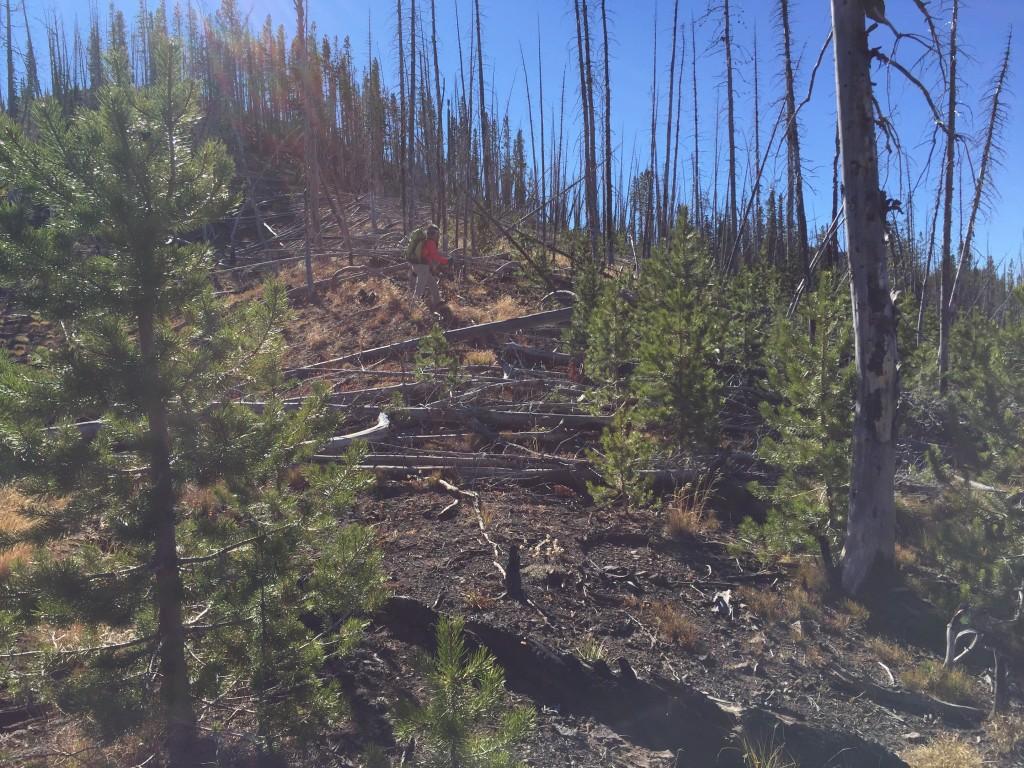 Where the ridge burned we ran into plenty of downfall.
