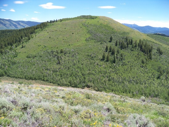 From above Lonetree Saddle, view is to north aspect of Goodheart Peak. The brush mat averaged 3' high. Rick Baugher Photo