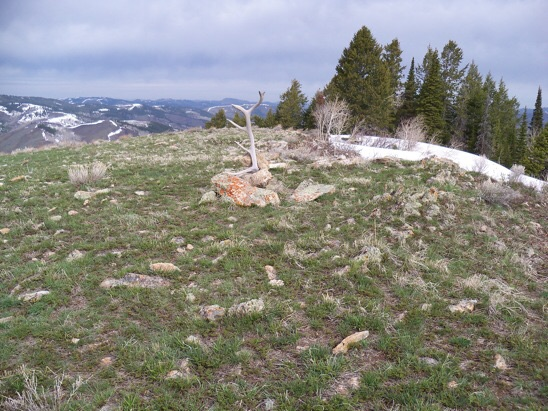 On the ridge top crossed a snowfield and brought along a large elk shed-horn. At the 7916' summit found survey remains but no BM. Rick Baugher Photo