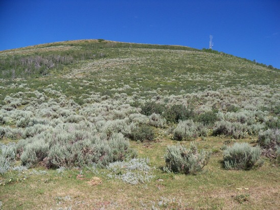 Southeast line of ascent thru the brush & scrub to the com tower summit of Sheep Creek Hills HP, 7/15/13. Rick Baugher Photo