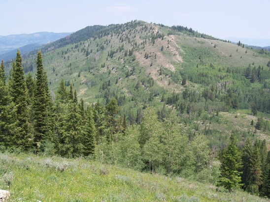 View to south slope of Spike Peak on 7/20/14. A spike or rebar stake is sometimes suggestive of a privately conducted mineral or timber survey. Rick Baugher Photo