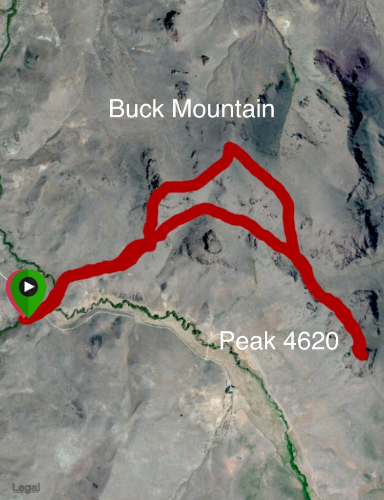 My GPS a track for Buck Mountain and Peak 4620.