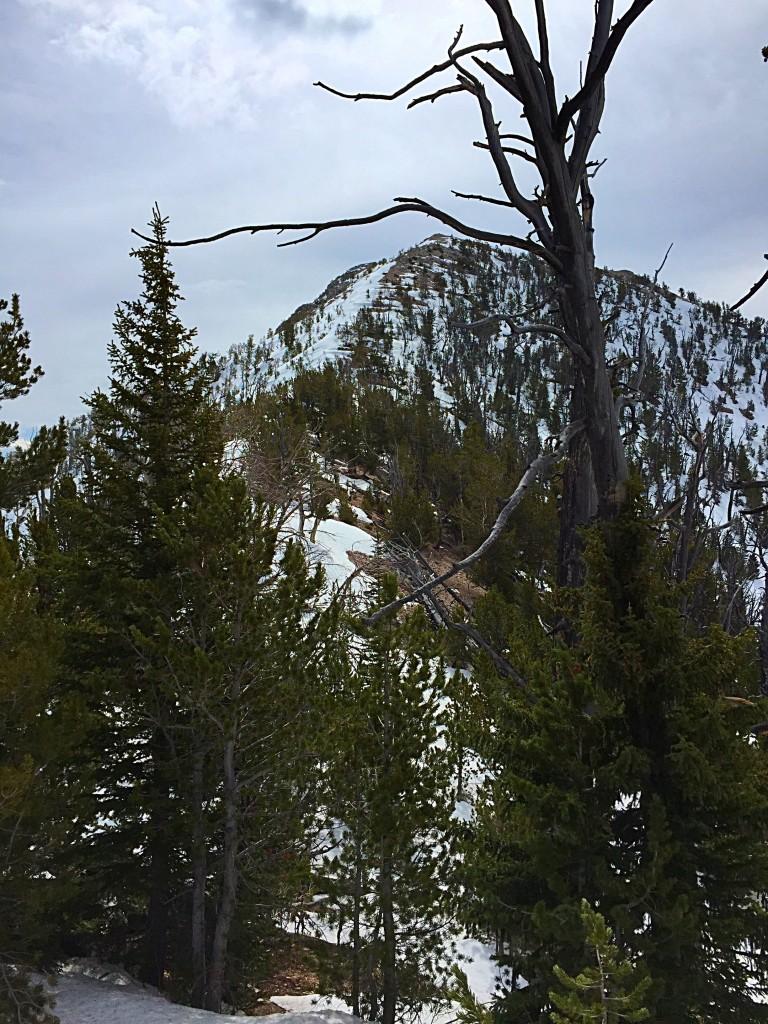 Peak 10122's northwest face.