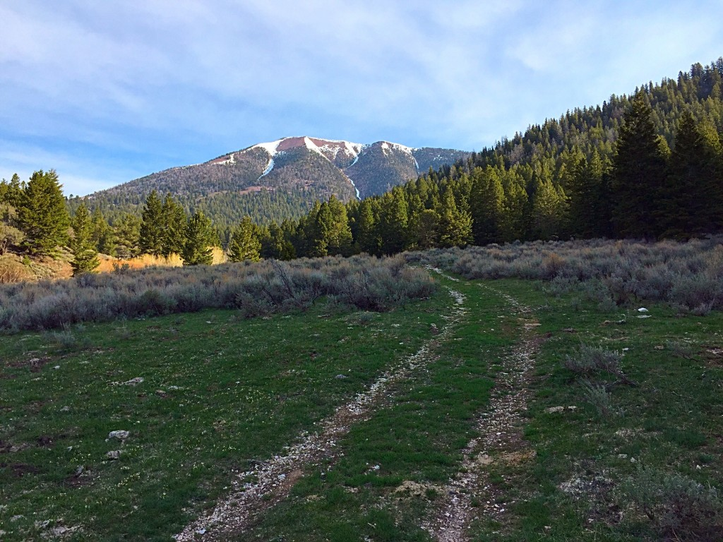 The meadow at 7,400 feet in Summerhouse Canyon and Bear Mountain.