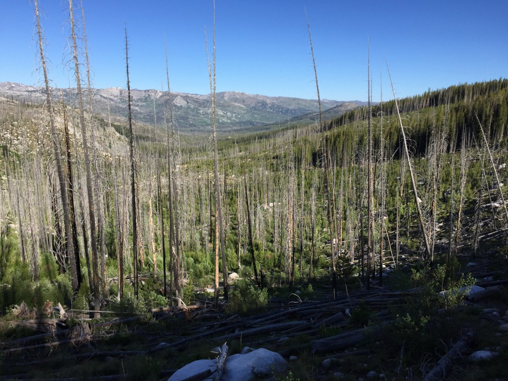 Much of the section of the Salmon River Mountains known as the Lick Creek Range has burned since 1990. Deep thick forest are gone in many places. This has opened up the terrain but also created vast areas that can only be crossed by clambering over downed trees.