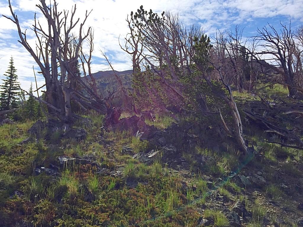 Nearing treeline on the west ridge.