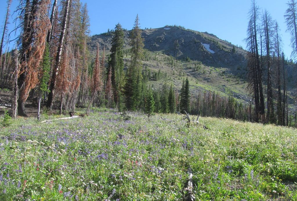 Pinyon Peak3